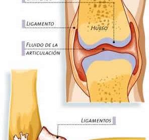 Articulaciones sinoviales o diartrosis